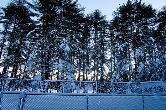 snow-covered pines down at alton jones
