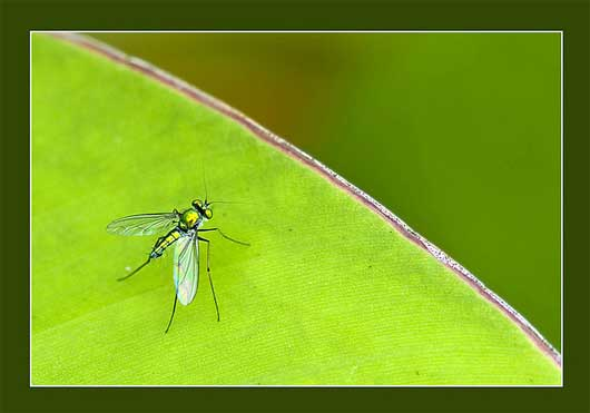 1st Macro Photography Outing - Green