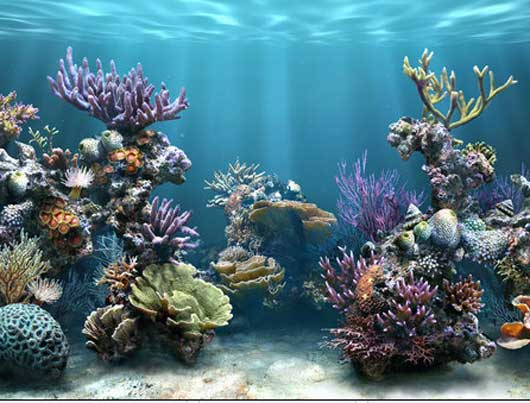 3d deep water for fishes