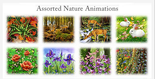 Assorted Nature Animations
