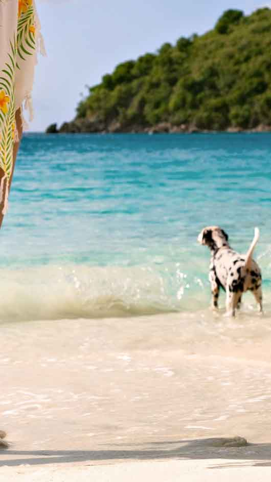 Dog Girl Summer Beach Sea Azure Blue, Nature wallpapers