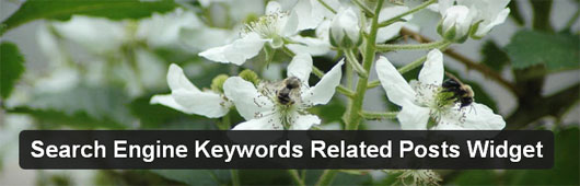 Search Engine Keywords Related Posts Widget