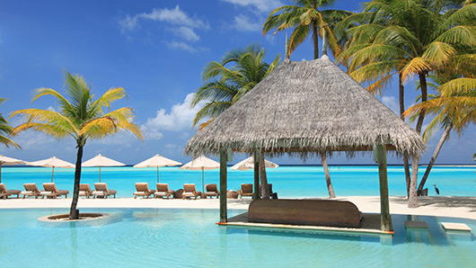 palm trees vacation sun beds pool