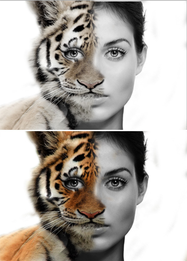 Morphing Human faces with Animal Faces in Photoshop